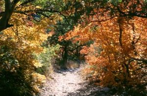 <b>Fall Scenery</b><br> McKittrick Canyon in the Fall is a riot of colors.
