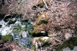 <b>Origin of a creek</b><br> This is the headwater of a llittle creek I followed West of Parsons. Didn't show on the map, and it only lasted about a mile, but it was cold and tasty!