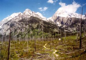 Grand Teton National Park - Bradley Lake