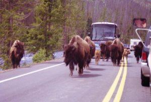Yellowstone National Park - Hellroaring Creek