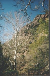 <b>Gaining altitude</b><br> Elevation increases slowly but surely. Not the Aspen trees, which are a sure sign you are getting up there.
