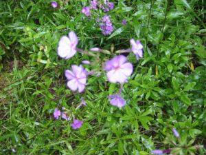 <b>More Flowers</b>