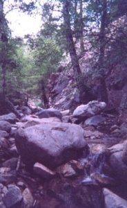 """<b>Lush Canyon</b><br> Once I hiked into Copper Canyon, things got much more green and less """"desert like""""."""