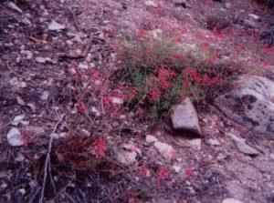 <b>Mountain Flowers</b>