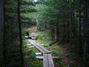 White Mountain National Forest - Mt. Morrah