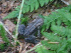 <b>Trail Frog</b>