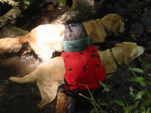 <b>Water Dogs</b><br> It's a hot hike out today. Both dogs go straight for the creek as soon as they get the chance.