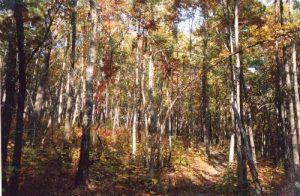 Uwharrie National Forest: Dutchman's Creek/Uwharrie National Recreational Trail Loop