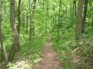<b>The Blackberry Ridge Trail</b>