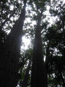 <b>Tall Trees</b><br> The forest is surprisingly thick on the trail to Manoa Falls.