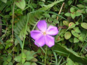 <b>Hawaiian Flowers</b><br> Flowers along the Manoa Falls Trail.