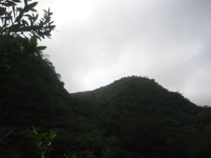 Honolulu Watershed Forest Reserve - Aihualama Trail
