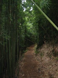 <b>Bamboo Forest</b><br> Here's a look at the trail as it passes a bamboo forest.