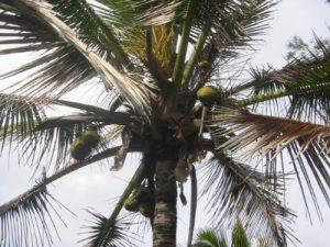 <b>Hawaiian Flora</b>