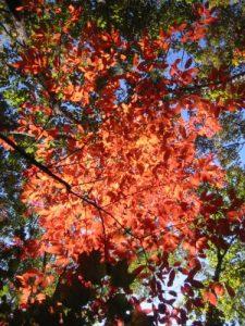 <b>Fall Foilage</b>