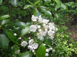 <b>Flowers Along The Trail</b>