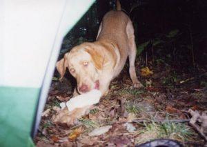 Chattahoochee National Forest - Slaughter Gap