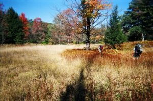 Moshannon State Forest - Quehanna