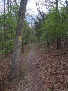 <b>The Lost Bridge Hiking Trail</b><br> Yellow blazes along the Lost Bridge Hiking Trail before dusk.