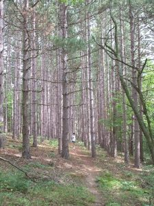 Forest-Heritage Trail (East)