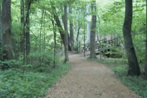Guilford Courthouse Natl Military Park, Foot Trail Loop