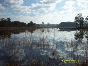 <b>Shallow Prairie Pond - typical surface water source</b>