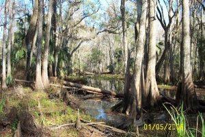 <b>Creek feeding into the Hillsborough River</b>