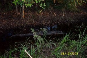 <b>Gator along the Cones Dike Trail</b>