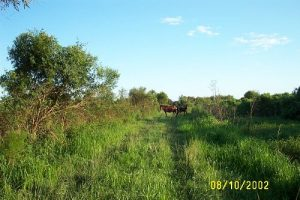 <b>Wild Horses of Paynes Prairie</b>