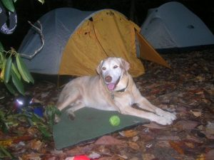 <b>Our Trail Hound</b><br> Despite ten years of age and occassional arthritis, the trail hound still does well on our hikes into the backcountry.