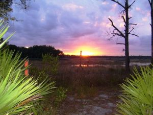 Hopkins Prairie to Lake Delancy - Fl. National Scenic Trail