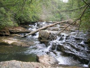 <b>Stream Before The Falls</b><br> This is the stream that eventually dumps across Savage Falls.