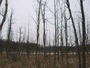<b>Lifeless Trees</b><br> Bare trees surrounding Lake Lonidaw.
