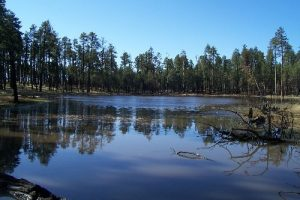 <b>Iron Lake</b><br> They call this a lake, but it is actually a muddy stock pond. Lots of frogs though!