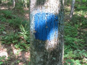<b>Blue Blazed Trail</b><br> The blue blazes of the trail that runs the ridge and passes the visitor's center.