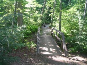 <b>Dockery Lake Trail</b><br> Bridge along the Dockery Lake Trail near the group camping area.