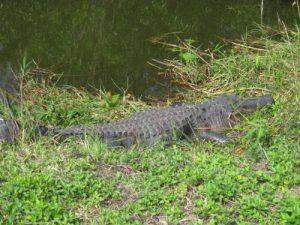Everglades National Park - Royal Palm Visitor Center