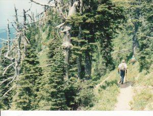 <b>Climbing from the Trailhead</b><br> Trail #8, a few hundred feet above the trailhead.