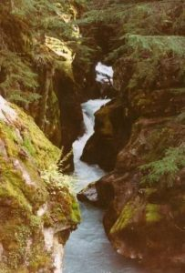 <b>Avalanche Creek</b><br> The gorge from the Trail of the Cedars bridge over Avalanche Creek.