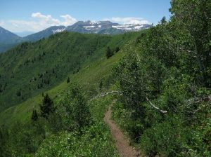 Uinta National Forest - Mill Canyon Peak Loop