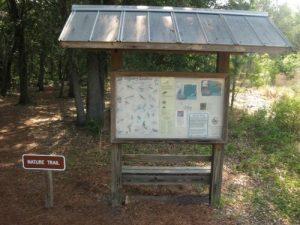 Lake Louisa State Park - Nature Trail
