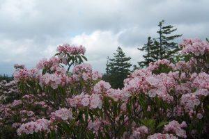 Roaring Plains West Wilderness - Summer Hike