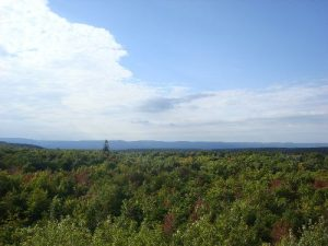 Forbes State Forest - Mount Davis