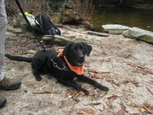 <b>And The Dog....</b><br> Fun day for a family hike.
