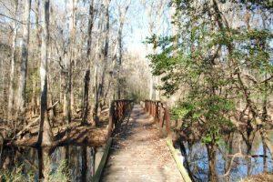 Congaree National Park - Oakridge Trail