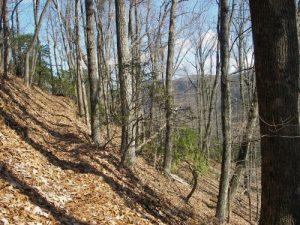 Doughton Park- Bluff Mountain/Bluff Ridge Trail