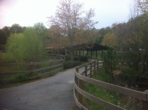 <b>Covered Picnic Area</b><br> A covered pavillion near a small pond on the Trail.