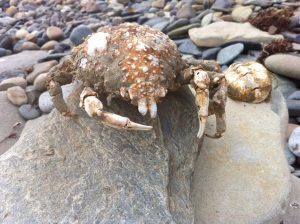 <b>APetrified Crab</b>