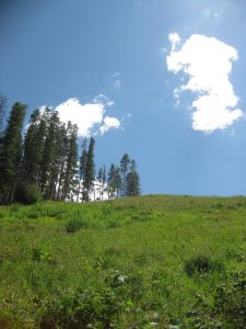 <b>Blue Skies At Beaver Creek</b><br> A beautiful day for a hike at Beaver Creek. Looking up the mountain at a ski run from Allie's Way.