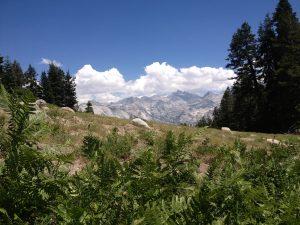 Alta Meadow and Peak